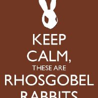 Rhosgobel Rabbits