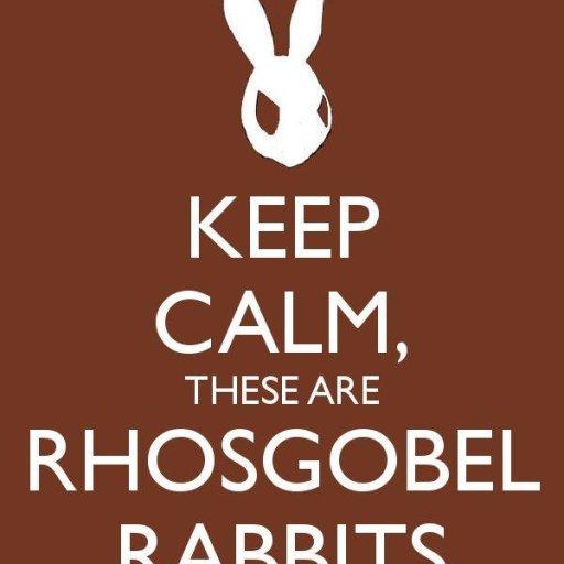 Rhosgobel Rabbits