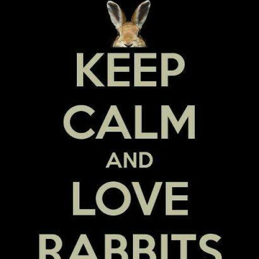 Rabbits (388)