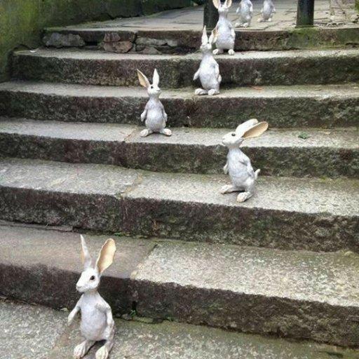 Rabbits (403)